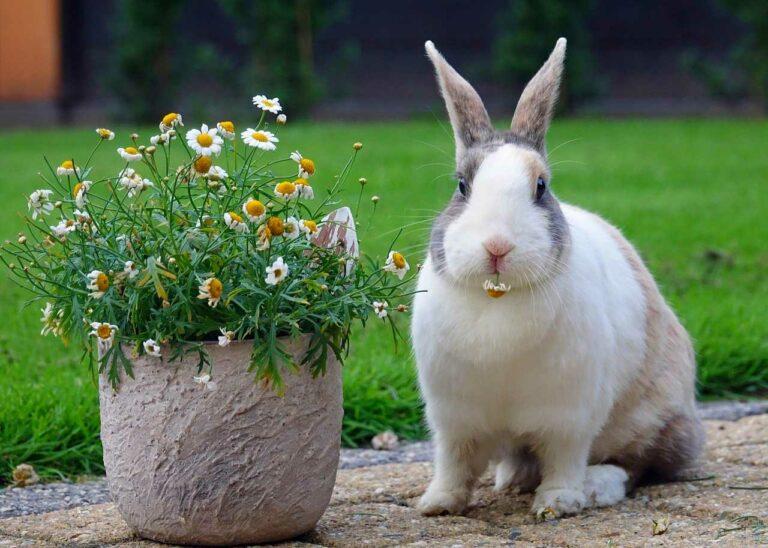 Co podać do jedzenia królikowi