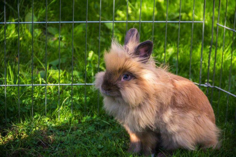 Klatka dla królika – jaką wybrać