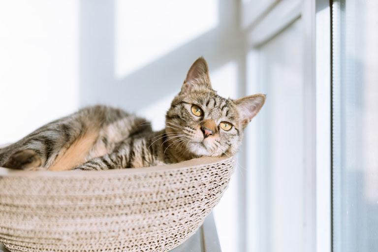 Odrobaczanie kota – preparaty, które warto znać - Zoonews.pl