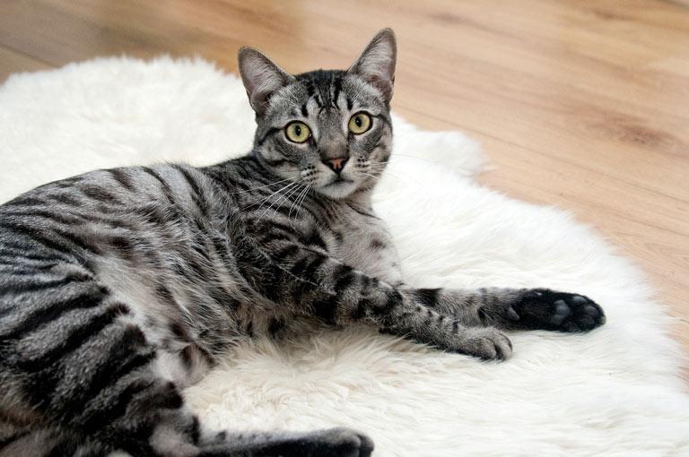 Przysmaki dla kota – gotowe i domowe - Zoonews.pl