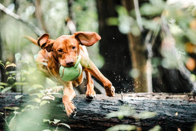 Żywienie psa aktywnego