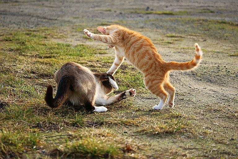 Tajemnica dokocenia – to musisz wiedzieć przed wprowadzeniem drugiego kota do domu