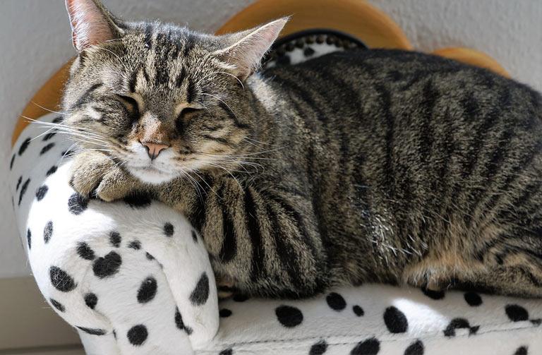 Jak karmić koty po kastracji i sterylizacji