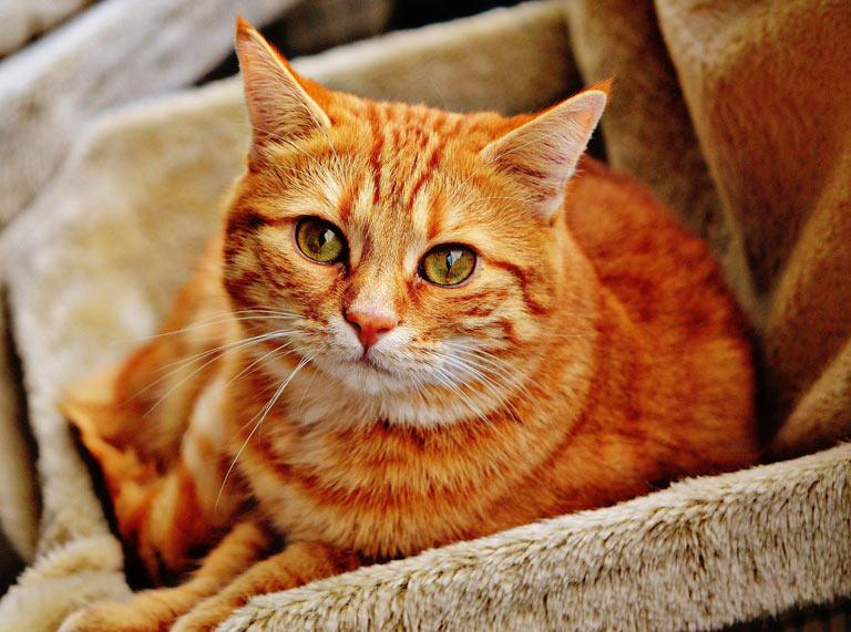 Objawy chorych nerek u kota