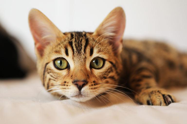 Czym jest niewydolność nerek u kota