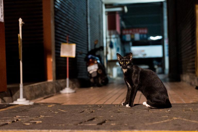 Kot miauczy nocą
