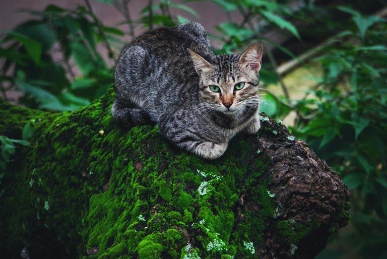 Jak pozbyć się pcheł u kota
