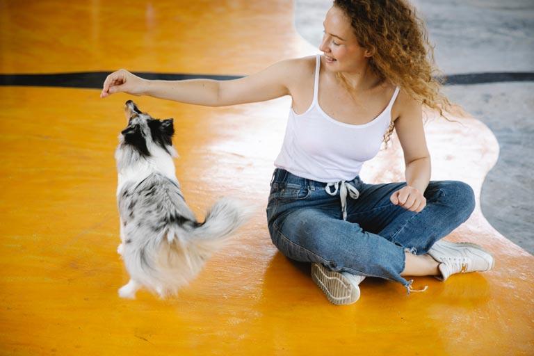 Przysmaki treningowe dla psa