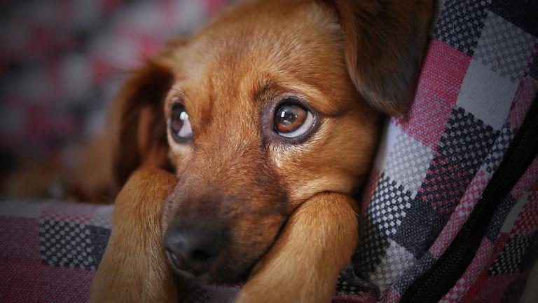 Czy pies może mieć łupież?