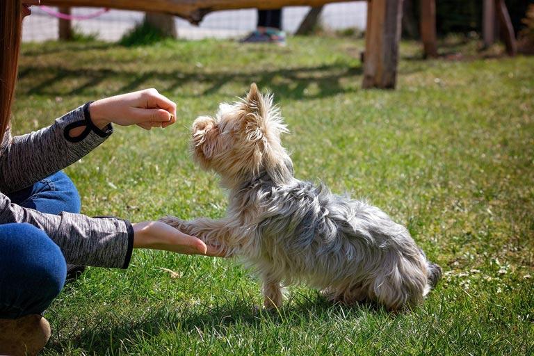 Komendy dla psa – czy znasz je wszystkie?